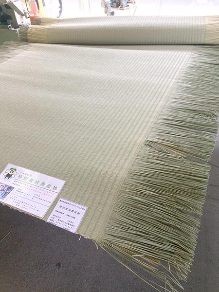 イ草の名産・熊本八代からの産地直送の国産畳表