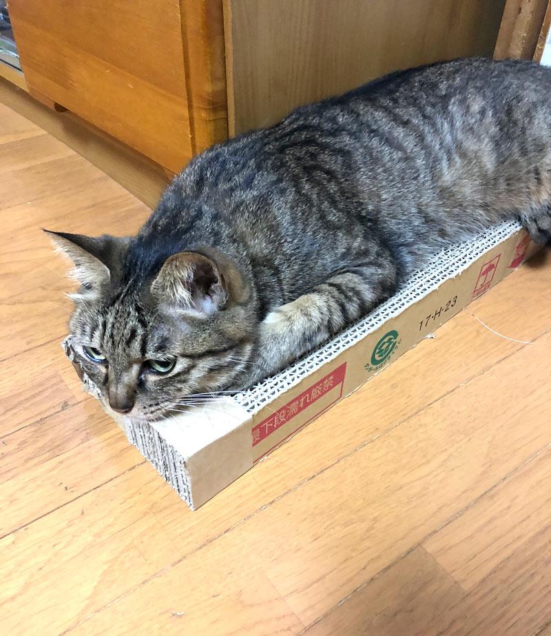 猫好き畳屋 春日井たたみ店